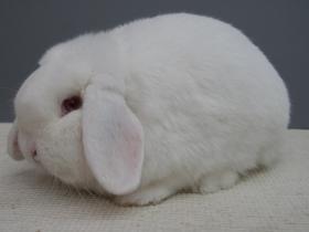 konijnendag047