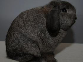 konijnendag017
