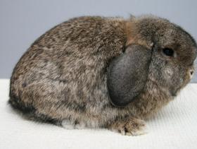 konijnendag038