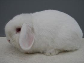 konijnendag036