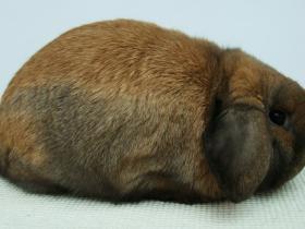 konijnendag033