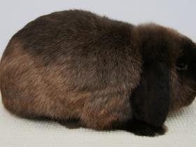 konijnendag035
