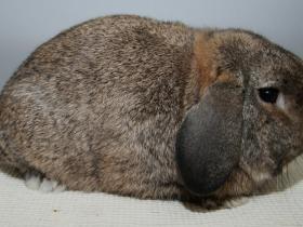 konijnendag015