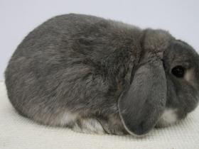 konijnendag028
